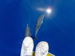 Striped dolphins swimming under a person's feet and under the sailboat in pristine blue water, in Mallorca, a balearic island, Spain. Could be Azores, Grece or Italy whalewatching tour.