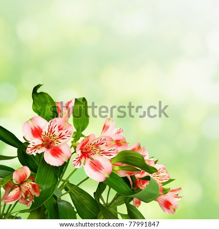 striped flowers on green blurred background