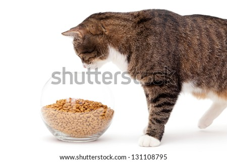 Striped, gray cat and a heap of dry food, isolated on white