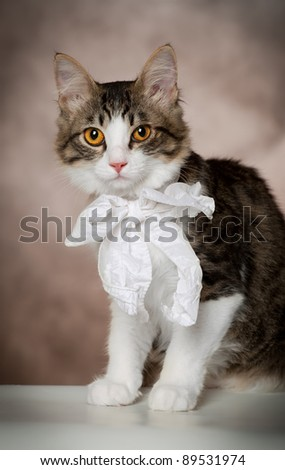 Striped kitten with a white bow on a brown background/
