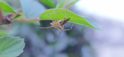Striped lynx spider on leaf garden striped lynx spider in indian village image yellow spider image