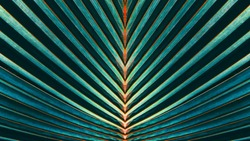 Striped of palm leaf, Abstract green texture background, Vintage tone