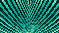 Striped of palm leaf, Abstract natural green texture background, Vintage tone