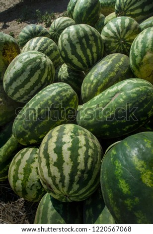 striped round and oval green watermelons, in the form of a background #1220567068