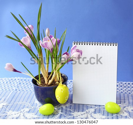"""Striped white-violet crocuses """" Pickwick"""" and easters eggs on a background the clean page of notebook for text"""