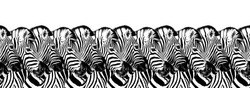 Striped zebras seamless pattern white background isolated, zebra head art border, animalistic black & white banner design, african animal wallpaper, wild nature frame, repeating ornament, trendy print