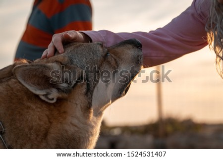 Stroking a domestic siberian wolf