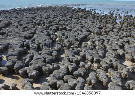 Stromatolites in Shark Bay Western Australia, a layered mounds rocks that were originally formed by the growth of layer upon layer of cyanobacteria. It's the most ancient life form on Earth.