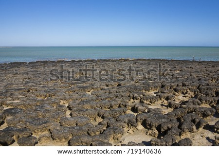 Stromatolites (Layered mounds, columns, and sheet-like sedimentary rocks. They were originally formed by the growth of layer upon layer of cyanobacteria, a single-celled photosynthesizing microbe) #719140636