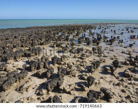 Stromatolites. (Layered mounds, columns, and sheet-like sedimentary rocks. They were originally formed by the growth of layer upon layer of cyanobacteria, a single-celled photosynthesizing microbe) #719140663