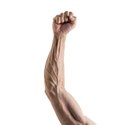 Strong arm and hand veins on white background. Object images for graphic design