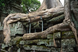 Strong bonding of tree and ruin at Ta Prohm Temble, Siem Reap, Cambodia