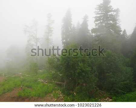 Strong fog in the mountains, thick fog, mountains in the fog #1023021226