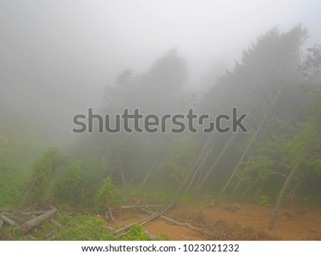 Strong fog in the mountains, thick fog, mountains in the fog #1023021232