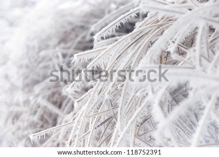Strong icy grass with ice crystals