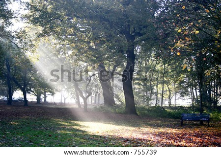 Strong rays of sun through the tall branches of the oak trees