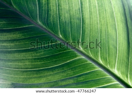 structure building plants green background