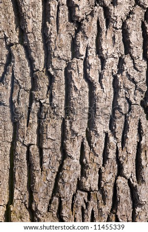 Structure of a bark of a tree close up