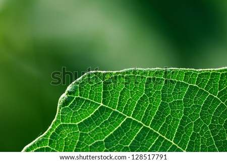 structure of a green leaf with green background