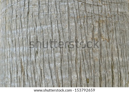 Structure of a trunk of a palm tree