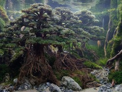 structure of aquascape for inspiration