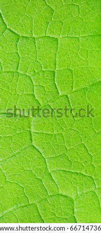 structure of green leaf natural background - stock photo