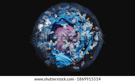 Structure of human cell, anatomy of cell, cellular environment, cellular concept with organelle: nucleus, membrane, mitochondria, Golgi apparatus  3d rendering