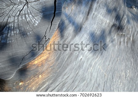 Structure of wood, ebony #702692623