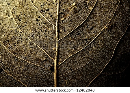 structure or a deteriorated leaf