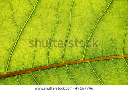 structure texture and pattern of green leaf #49167946
