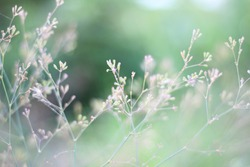 Structures of flowering grass soft blur The background for the creation of ideas Ecology Design Sunlight Crop Branch View backdrop