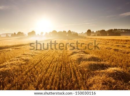 stubble field at sunrise #150030116