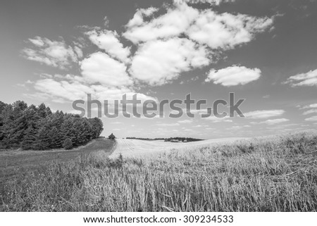 Stubble field under sky with white clouds. Black and white photo. Summertime landscape. Polish countryside.