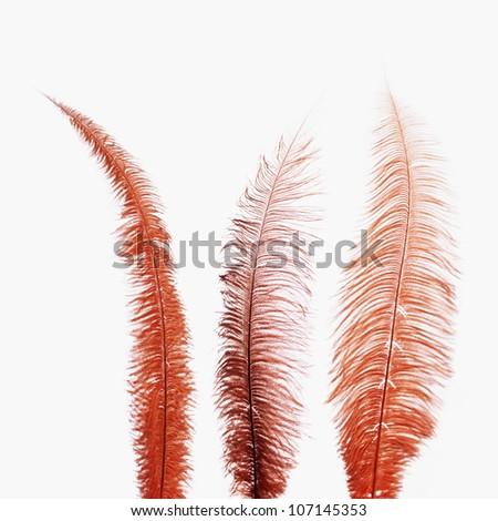 Studio close up of three feathers