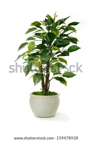 Studio image of a miniature artificial tree in a pot. Concept image for interior design or office furniture use against a white background. Copy space.