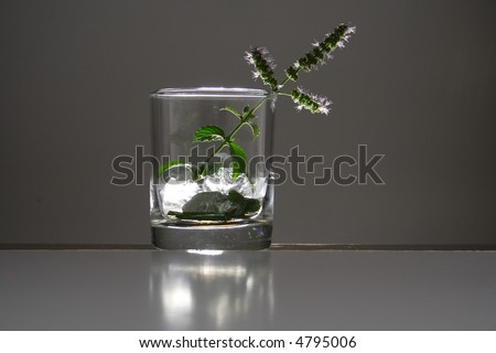 Studio lit glass filled with shiny cubes of ice and mint leaves