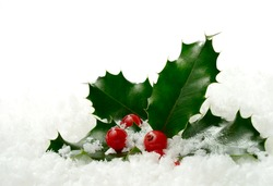 Studio macro of fresh holly leaves and berries in soft snow. Copy space.
