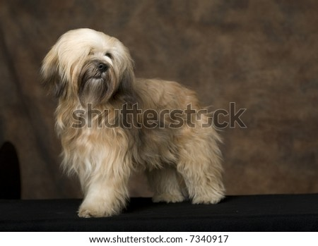 studio photo of prize winning dog