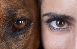studio portrait of human and dog eyes