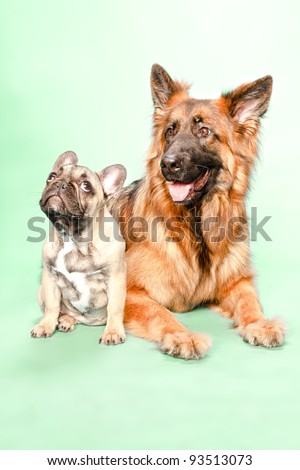 Studio portrait of puppy bulldog and german shepard isolated on light green background