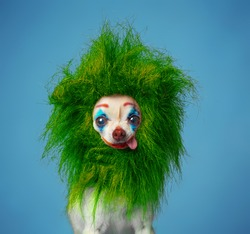 studio shot of a dog with a digitally painted face on an isolated background