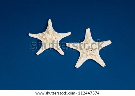 Studio shot of a pair of bumpy white starfish on a blue background