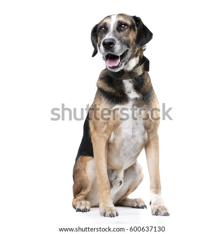 Studio shot of an adorable mixed breed dog sitting on white background. #600637130
