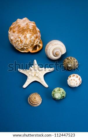 Studio shot of an assortment of seashells on a blue background