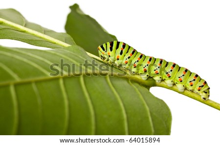 studio shot of butterfly larva isolated on white