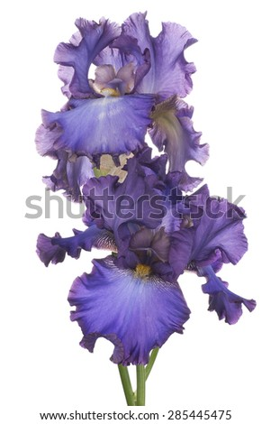 Free Photos Studio Shot Of Blue Colored Iris Flowers Isolated On