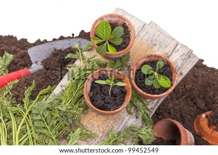 studio-shot of planting seedlings in terracotta flower pots, isolated on a white background.
