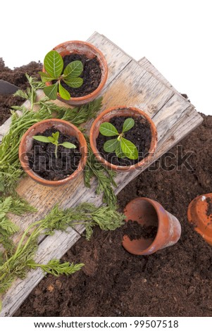 studio-shot of planting seedlings in terracotta flower pots, isolated on a white background