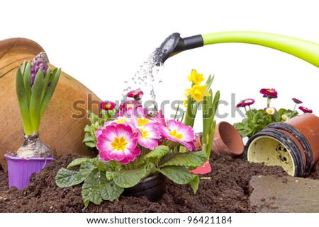 studio-shot of watering a flowerbed with various flowers and a green watering can, isolated on white.