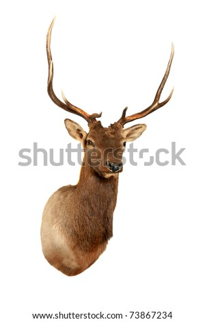 stuffed dear head, isolated on white with room for your text